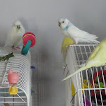 Jan 21-12 My flock.JPG