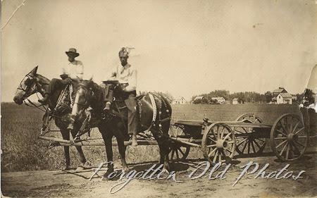 Horses Orville Paulson RP Postcard DL Antiques