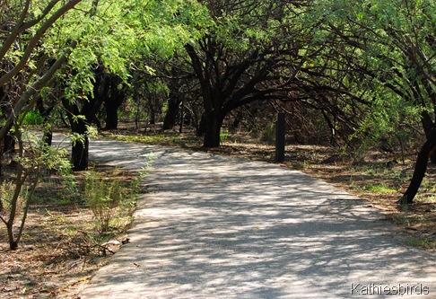 6. mesquite bosque-kab