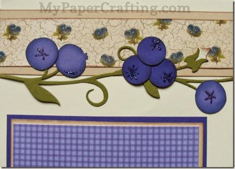 blueberry vinecu-480