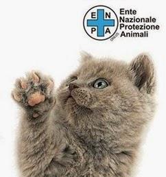 Gatti-solidarieta-Royal-canin-per-ENPA-anteprima-600x369-765364