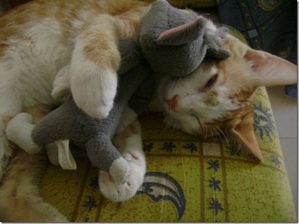 cats-stuffed-animals-4