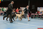 20130510-Bullmastiff-Worldcup-1190.jpg