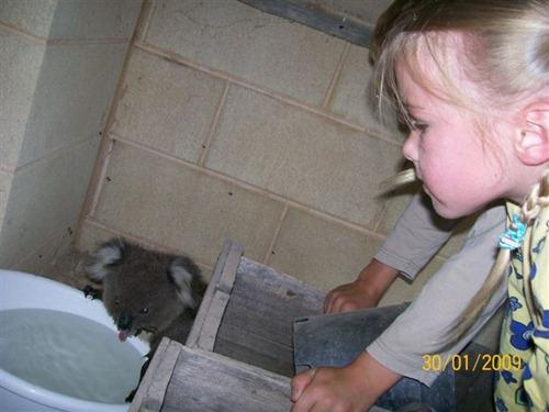 Малыш коалы хочет пить