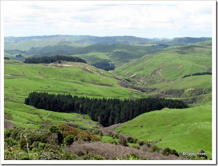 Views along the Pahiatua - Pongoroa Road. Quite a high elevation.