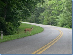 1030 Virginia - Blue Ridge Parkway North - white-tailed deer and mile marker post