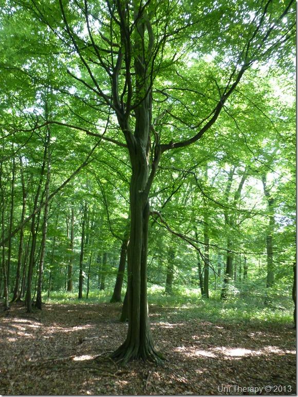 Uni Therapy: Lapugnoy. Bois de la Roquelaure