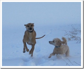 20120226_dogs_010