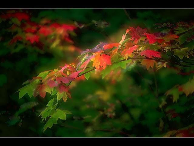 Jesen - fotografije - Page 4 Photoimagery-1097717766