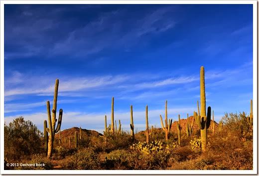 131202_SaguaroNPWest_028