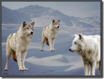 lobos  (2)