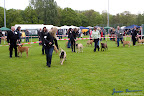 20100513-Bullmastiff-Clubmatch_30889.jpg