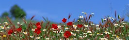 flower panoram_nebesnoe.info_01.jpg