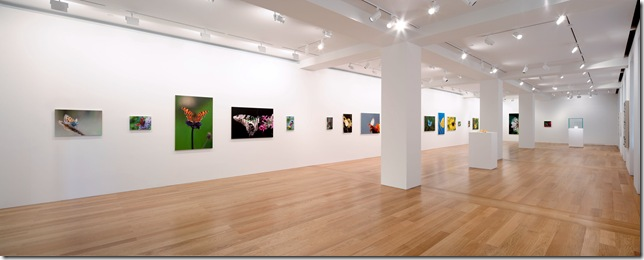 gallery-shot-1
