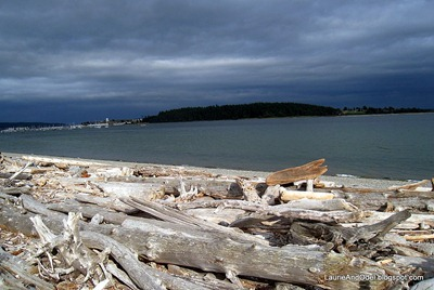 Driftwood in Oak Harbor