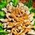 Kurczak w sosie gorczycowym
