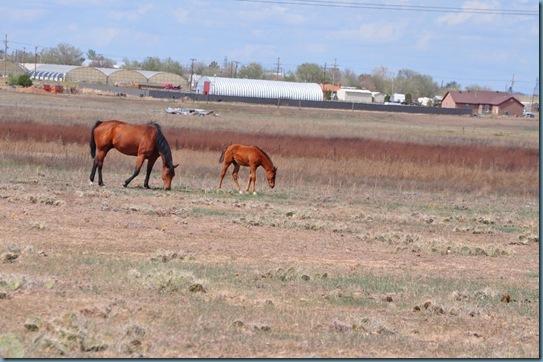 05-09-13 horses 06