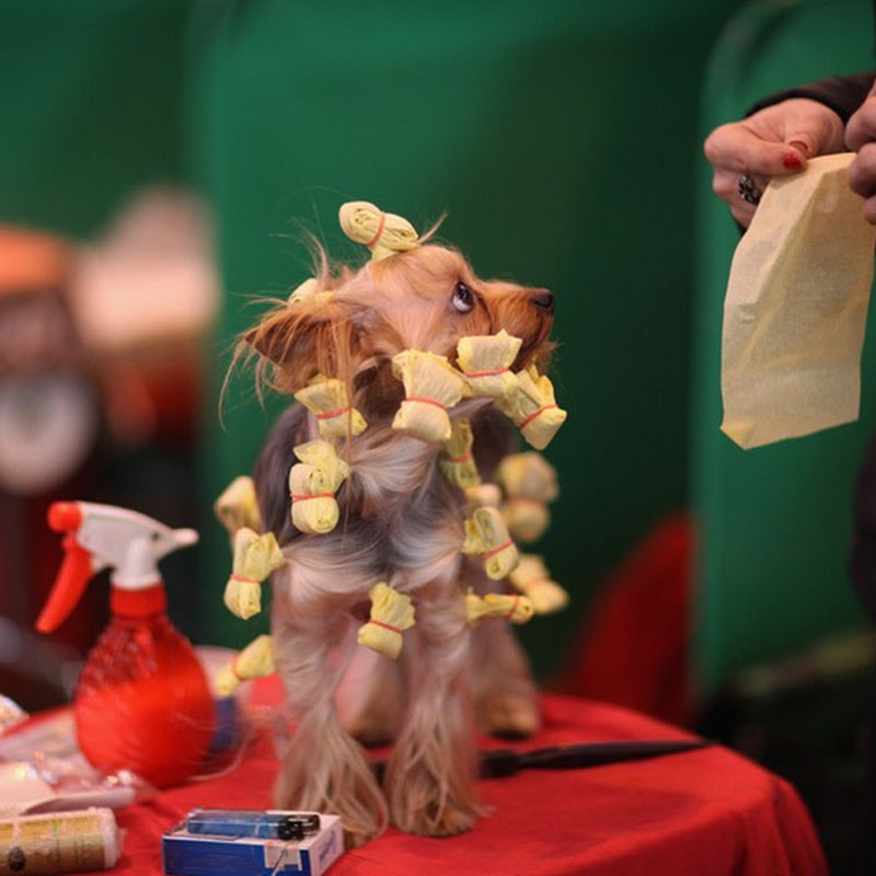 Crufts Dog Show 2012