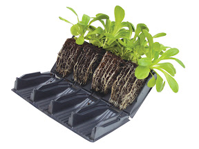 Compact Rapid Rootrainer - Open showing root systems
