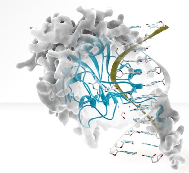 epigenetica1