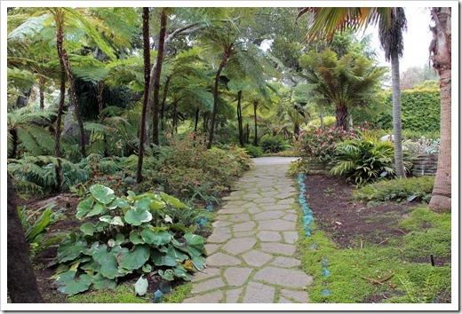 130403_Lotusland_Fern-Garden_Farfugium-japonicum-Argenteum_06