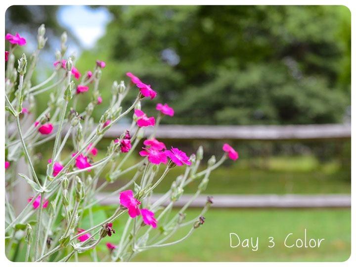 3 color 2