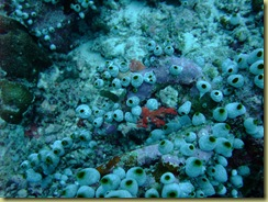 Scavenger Sponge Colony