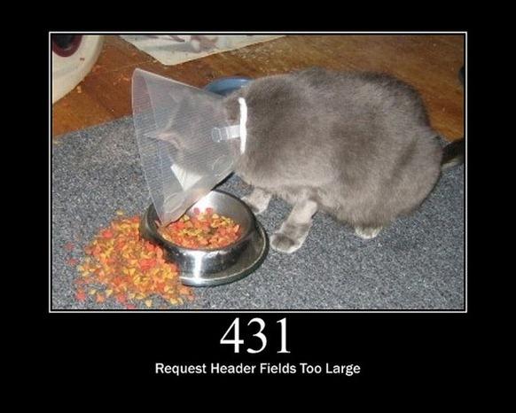 HTTP-Status-Cats-21