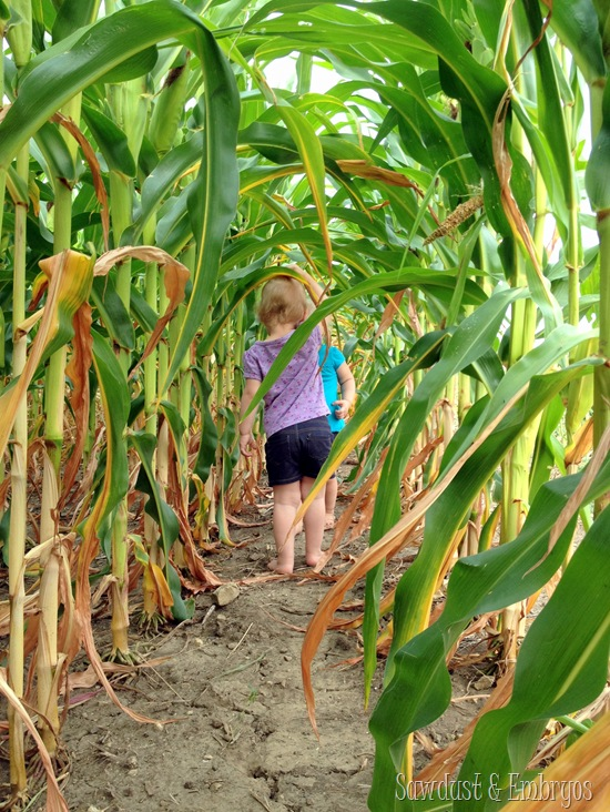 Cornfield Exploration {Sawdust and Embryos}