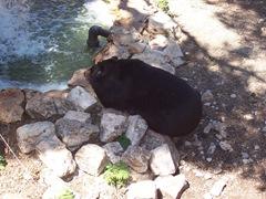 2009.05.16-033 ours à collier