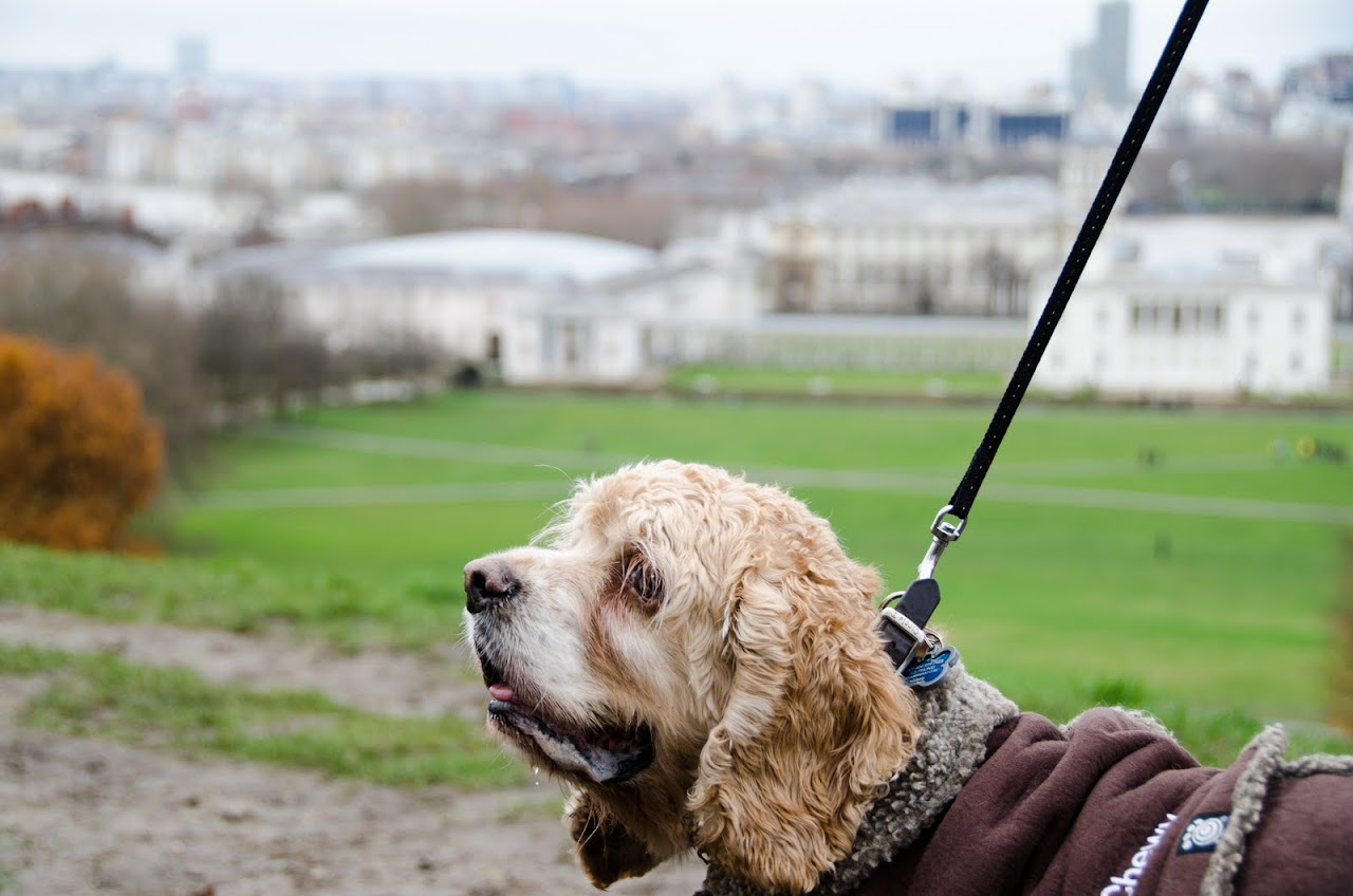 Chewy with London skyline in the background