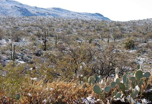 6. cactus snow-kab