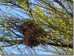 verdin nest double decker side 8-10-2013 2-15-07 PM 3070x2306