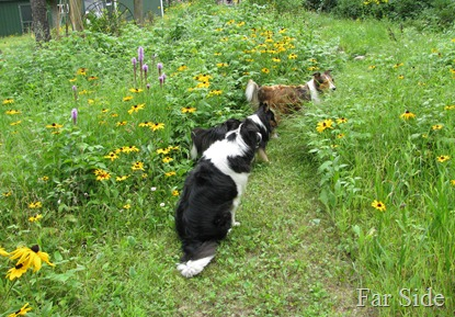 The dogs on the Wildflower path