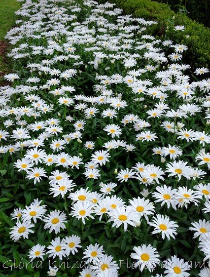 Glória Ishizaka - flores - 18