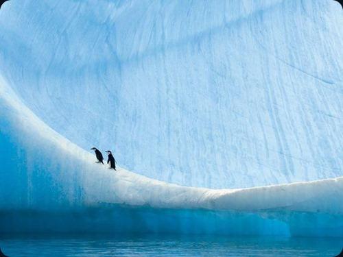 Polar Obsession9