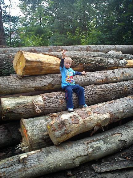 Natura ciągnie do lasu, nawet jeśli to już tylko ścięte drzewa