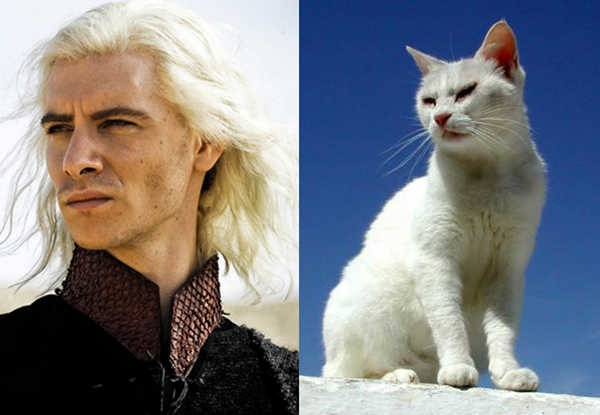 E se os personagens de Game of Thrones fossem gatos 16