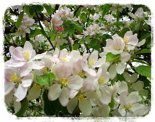 LINEcamera_share_2013-05-19-19-03-44 (1)