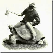humor tortugas (38)