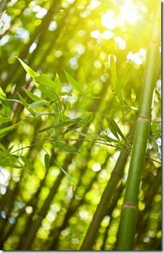 7008258-bamboo-forest-with-sunlight-natural-green-background