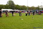 20100513-Bullmastiff-Clubmatch_30940.jpg