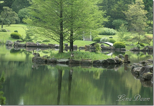 DA_JapaneseGarden_Lake