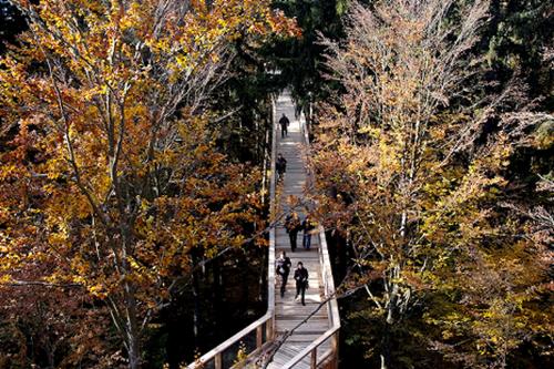 Parque Nacional da Bavária (4)