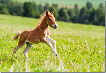 horse00