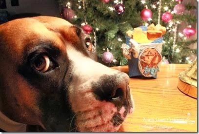 doggietreatskeepercopy