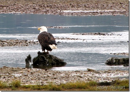 Eagle on the shore