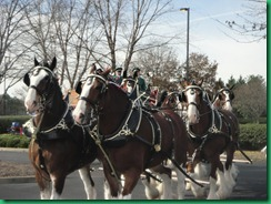 clydesdales 2