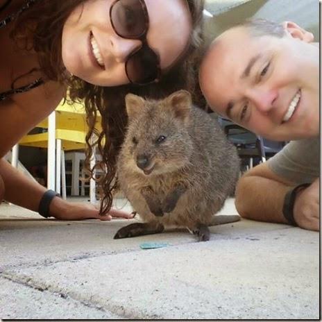 selfies-australian-quokka-016