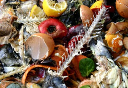 food-waste1_web